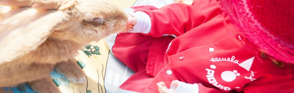 1 de marzo la granja viene a piquio piquio escuela infantil pozuelo - Escuela infantil pozuelo ...